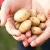 Συνταγή: Baby Potatoes στον φούρνο με παρμεζάνα