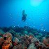 Το Υποβρύχιο Μουσείο Αλοννήσου ταξιδεύει και μαγεύει έξι χώρες και δύο ηπείρους