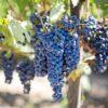 Τα 12 καλύτερα κόκκινα Ελληνικά κρασιά, τι γράφουν οι New York Times