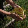 Ζωδιακός Κύκλος Βοτάνων και Αλάτων, δείτε το βότανο που σας αντιπροσωπεύει
